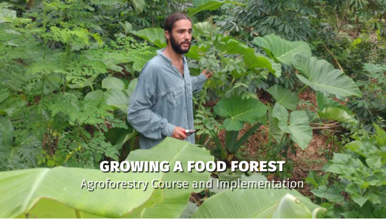 "Call For Scholarship Applications! ""Growing A Food Forest: Agroforestry Course And Implementation With Arthur Venturella"""